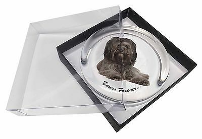 Tibetan Terrier 'Yours Forever'  Glass Paperweight in Gift Box Christ, AD-TT2yPW