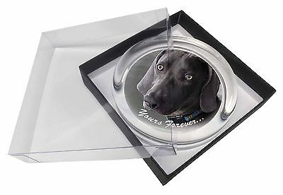 Weimaraner Dog 'Yours Forever' Glass Paperweight in Gift Box Christmas, AD-W79PW
