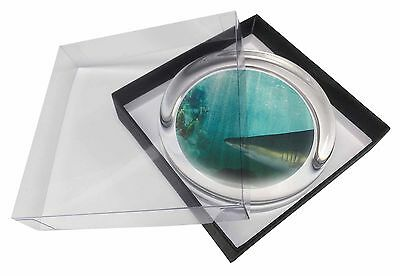Shark Photo Glass Paperweight in Gift Box Christmas Present, AF-SHA1PW