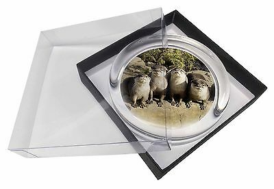 Cute Otters Glass Paperweight in Gift Box Christmas Present, AO-6PW