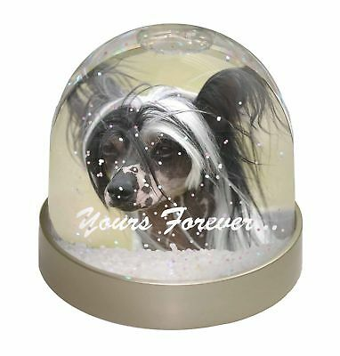 """Chinese Crested Dog """"Yours Forever..."""" Photo Snow Dome Waterball Sto, AD-CHC2yGL"""