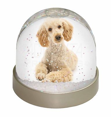 Apricot Poodle Photo Snow Dome Waterball Stocking Filler Gift, AD-CP7GL
