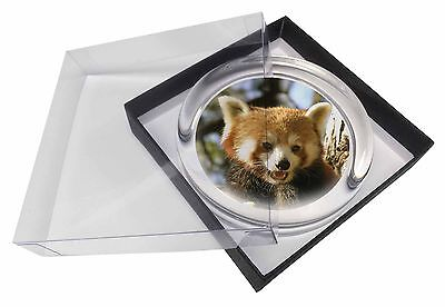 Red Panda Bear Glass Paperweight in Gift Box Christmas Present, ARP-1PW