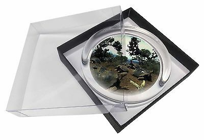 Galapagos Tortoise Glass Paperweight in Gift Box Christmas Present, AR-T11PW