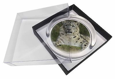 Beautiful Snow Leopard Glass Paperweight in Gift Box Christmas Present, AT-47PW