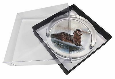 Mink on Ice Glass Paperweight in Gift Box Christmas Present, AWE-1PW