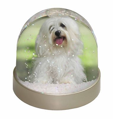 Havanese Dog Photo Snow Dome Waterball Stocking Filler Gift, AD-H66GL