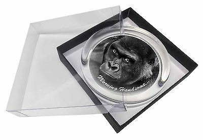 Gorilla with /'Morning Handsome/'.. Glass Paperweight in Gift Box Chris MH-AM2PW