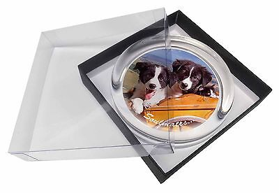 Border Collie Puppies 'Soulmates' Glass Paperweight in Gift Box Chris, SOUL-24PW