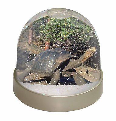 Giant Galapagos Tortoise Photo Snow Dome Waterball Stocking Filler Gif, AR-T10GL