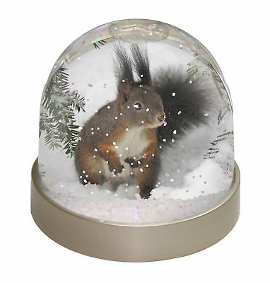 Forest Snow Squirrel Photo Snow Dome Waterball Stocking Filler Gift, AS-4GL