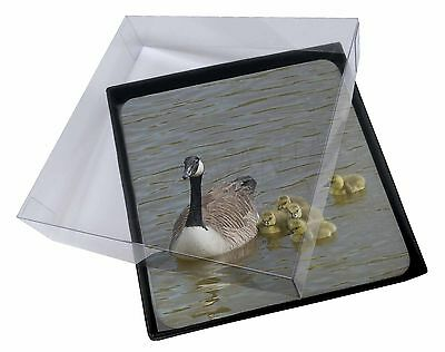 4x Canadian Geese and Goslings Picture Table Coasters Set in Gift Box, AB-G1C