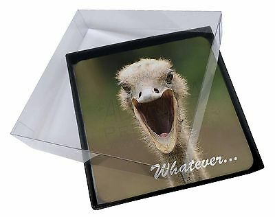 4x Ostritch with 'Whatever' Picture Table Coasters Set in Gift Box, AB-OS2C
