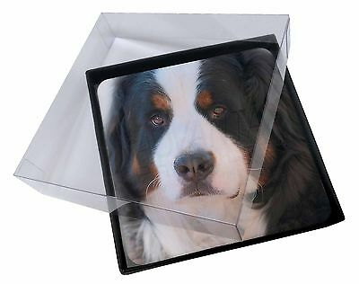 4x Bernese Mountain Dog Picture Table Coasters Set in Gift Box, AD-BER5C