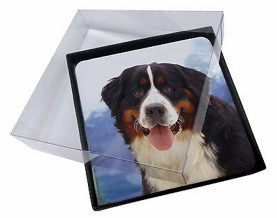 4x Bernese Mountain Dog Picture Table Coasters Set in Gift Box, AD-BER6C