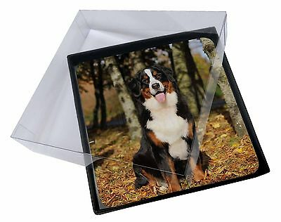 4x Bernese Mountain Dog Picture Table Coasters Set in Gift Box, AD-BER7C