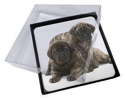 4x Bullmastiff Dog Puppies Picture Table Coasters Set in Gift Box, AD-BMT2C