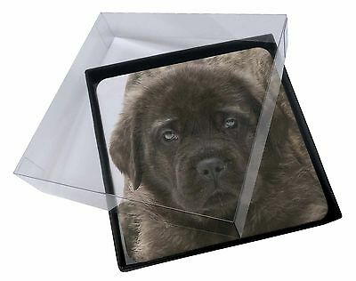 4x Bullmastiff Puppy Picture Table Coasters Set in Gift Box, AD-BMT3C