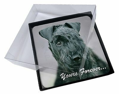 4x Kerry Blue Terrier 'Yours Forever' Picture Table Coasters Set in Gi, AD-KB1yC