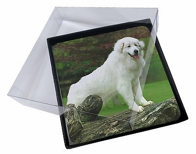 4x Pyrenean Mountain Dog Picture Table Coasters Set in Gift Box, AD-PM1C