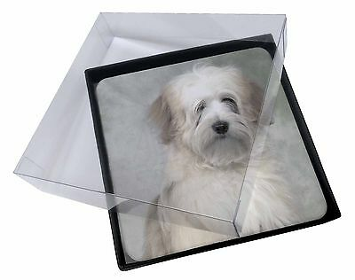 4x White Tibetan Terrier Dog Picture Table Coasters Set in Gift Box, AD-TT1C