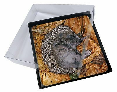 4x Sleeping Baby Hedgehog Picture Table Coasters Set in Gift Box, AHE-4C