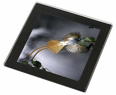 Humming Bird Black Rim Glass Coaster Animal Breed Gift, AB-91GC