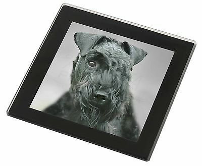 Kerry Blue Terrier Dog Black Rim Glass Coaster Animal Breed Gift, AD-KB1GC
