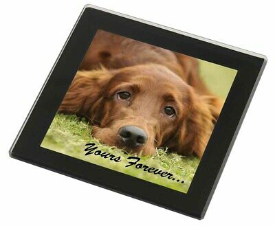 Red Setter Dog 'Yours Forever' Black Rim Glass Coaster Animal Breed G, AD-RS2yGC