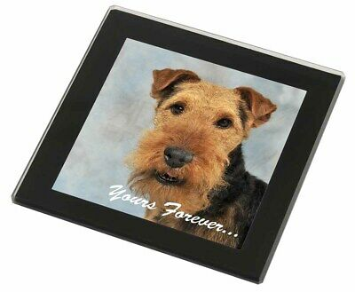 Welsh Terrier 'Yours Forever' Black Rim Glass Coaster Animal Breed Gi, AD-WT1yGC