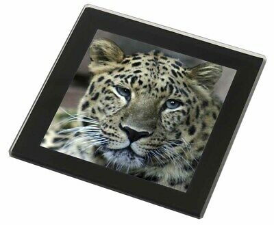 Leopard Black Rim Glass Coaster Animal Breed Gift, AT-22GC
