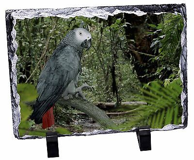 African Grey Parrot Photo Slate Christmas Gift Ornament, AB-PA76SL