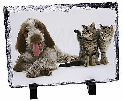 Italian Spinone Dog and Kittens Photo Slate Christmas Gift Ornament, AD-SP1SL