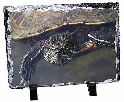 Terrapin Intrigued by Camera Photo Slate Christmas Gift Ornament, AR-T1SL