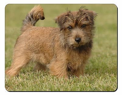 Norfolk Terrier Dog Computer Mouse Mat Christmas Gift Idea, AD-NT1M