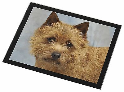 Norfolk-Norwich Terrier Dog Black Rim Glass Placemat Animal Table Gift, AD-NT2GP
