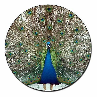Rainbow Feathers Peacock Fridge Magnet Stocking Filler Christmas Gift, AB-PE13FM