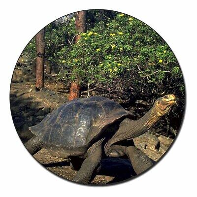 Giant Galapagos Tortoise Fridge Magnet Stocking Filler Christmas Gift, AR-T10FM