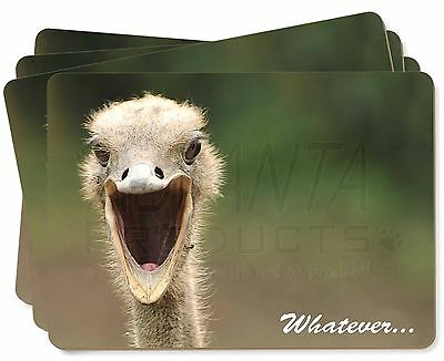 Ostritch with 'Whatever' Picture Placemats in Gift Box, AB-OS2P