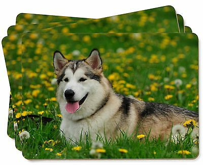 Alaskan Malamute Dog Picture Placemats in Gift Box, AD-AM3P