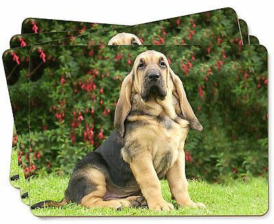 Bloodhound Dog Picture Placemats in Gift Box, AD-BL1P