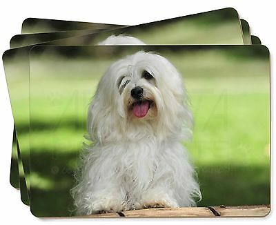 Havanese Dog Picture Placemats in Gift Box, AD-H66P