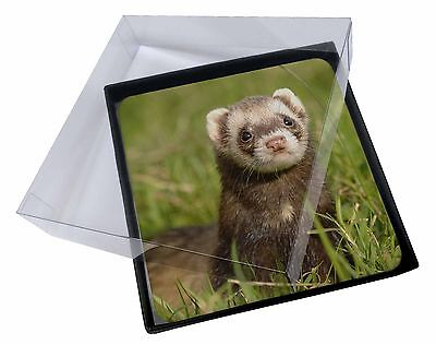 4x Polecat Ferret Picture Table Coasters Set in Gift Box, FER-1C