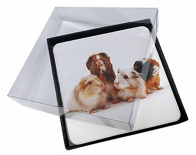 4x Guinea Pigs Picture Table Coasters Set in Gift Box, GIN-1C