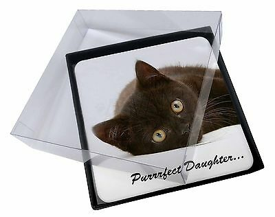 Black Kitten /'Purrrfect Daughter/' Gold Rim Plate in Gift Box Christmas PD-185PL