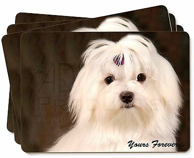 Maltese Dog 'Yours Forever' Picture Placemats in Gift Box, AD-M1yP