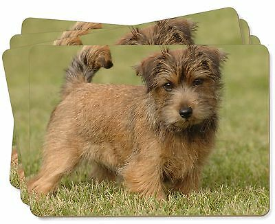 Norfolk Terrier Dog Picture Placemats in Gift Box, AD-NT1P