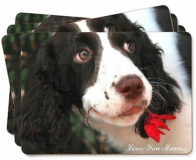 Springer Spaniel Dog Picture Placemats in Gift Box AD-SS1P