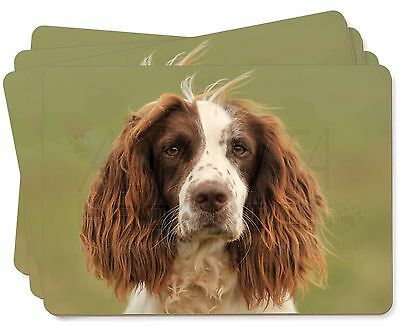 Springer Spaniel Dog Picture Placemats in Gift Box, AD-SS77P