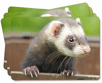 Ferret Print Picture Placemats in Gift Box, FER-2P